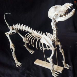Fully Assembled Skeletons